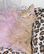 Homemade Kitten Princess Costume for Pets