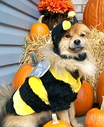 Koko Bee Bean Dog Costume
