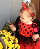 Lady Bug Baby Costume
