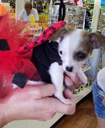 Lady Bug Dog Homemade Costume