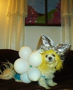 Lady Gaga Dog Homemade Costume