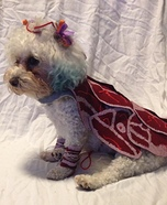 Lady Gaga Dog's Costume