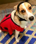 Ladybug Dog Homemade Costume