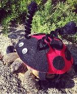 Ladybug Tortoise Homemade Costume