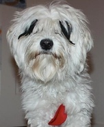 Lamb Chop Dog Costume