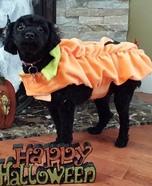 Lil Pumpkin Dog Costume