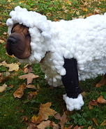 Lilly the Shar Pei Sheep Homemade Costume