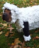 Lilly the Shar Pei Sheep Homemade Costume