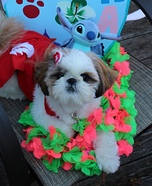 Lilo and Stitch Dog Homemade Costume
