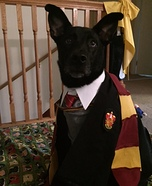 Lily Potter Dog Homemade Costume