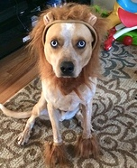 Lion Dog Homemade Costume