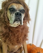 Lion Dog's Halloween Costume