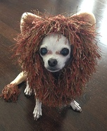 Lion Dog Costume Idea