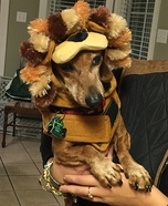 Lion King Dog Costume