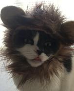 Lion Kitty Homemade Costume