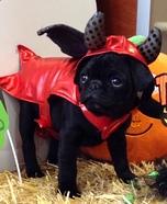 Little Devil Dogs Costume