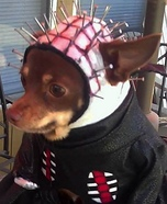 Creative costume ideas for dogs: Hellraiser Pinhead Costume