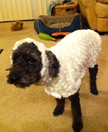 Little Lost Sheep Homemade Costume for Dogs