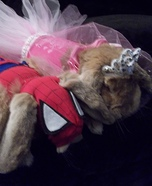 Little Princess and Spiderbunny Pet Costumes