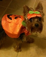 Little Pumpkin Dogs Costume