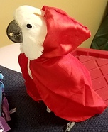 Little Red Riding Hood Cockatoo Homemade Costume