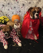 Little Red Riding Hood, Grandma and Big Bad Woof Homemade Costume