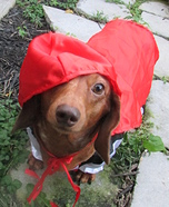 Little Red Riding Hound Costume