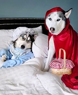 Little Red Riding Husky Homemade Costume