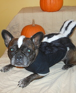 Creative costume ideas for dogs: Little Stinker Costume