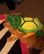 Little Turtle Homemade Costume