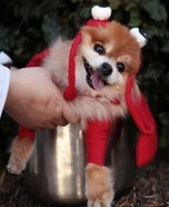 DIY Lobster Dog Costume