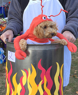 Lobster in a Pot Puppy Costume