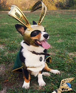 Creative costume ideas for dogs: Loki Halloween Costume for Pets