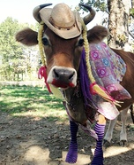 Steer dressed up like a Cowgirl