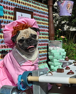Creative costume ideas for dogs: Lucy at the Chocolate Factory Dog's Costume