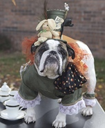 Mad Hatter Dog Homemade Costume