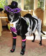 Madame Spider Dog Homemade Costume