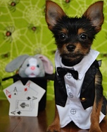 Creative costume ideas for dogs: Magician