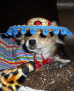Mardi Gras Costume for Dogs