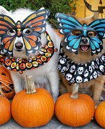Mardi Gras Butterfly Dogs Homemade Costume