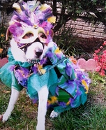 Mardi Gras Dog Homemade Costume