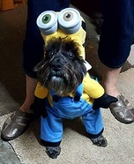 Minion Dog Costume Idea