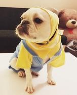 Minion French Bulldog Costume