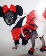 Minnie Mouse Dog Homemade Costume