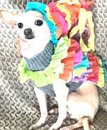 Miss Pinata and Miss Taco Dogs Homemade Costume