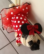 Creative costume ideas for dogs: Homemade Minnie Mouse Costume for Dogs