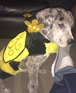 Molly the Bee Costume