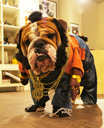 Creative costume ideas for dogs: Mr T Doggie Dog