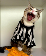 Homemade NFL Referee Cat Costume