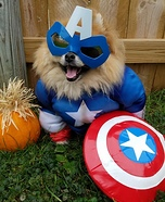 Niko - Captain America Dog Costume